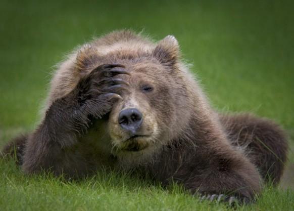 Immer schön lächeln, das Weekend steht an– aber vorher gibt's noch lustige Tierbilder Der Bär ist nicht erfreut!