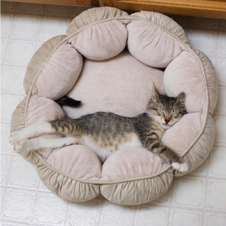 15 katzen die ihre fotos aus kinder h k tzchen tagen nachstellen. Black Bedroom Furniture Sets. Home Design Ideas