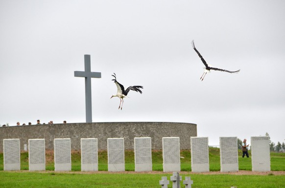 epa03809921 Storks fly over the German Military Cemetery in Dukhovshchina, Smolensk Oblast, Russia, 01 August 2013. 68 years after the end of World War II, the German Defence Minister will inaugurate the cemetery on 03 August 2013.  EPA/UWE ZUCCHI