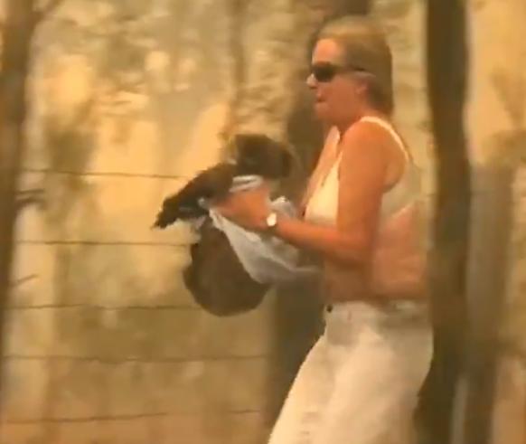 Dieses Video zeigt, wie dramatisch die Waldbrände in Australien für die Tiere sind