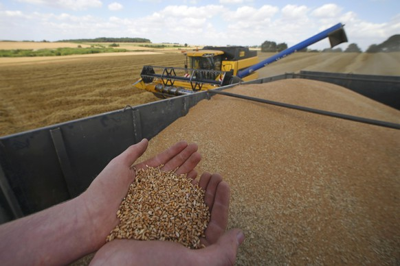 A French farmer displayes freshly-harvested wheat in Honnecourt-sur-Escaut, near Cambrai, France, August 9, 2016. France's soft wheat exports outside the EU could drop by 60 percent this season as it faces the worst yields in 30 years and erratic grain quality after bad weather hit crops, consultancy Agritel said.     REUTERS/Pascal Rossignol