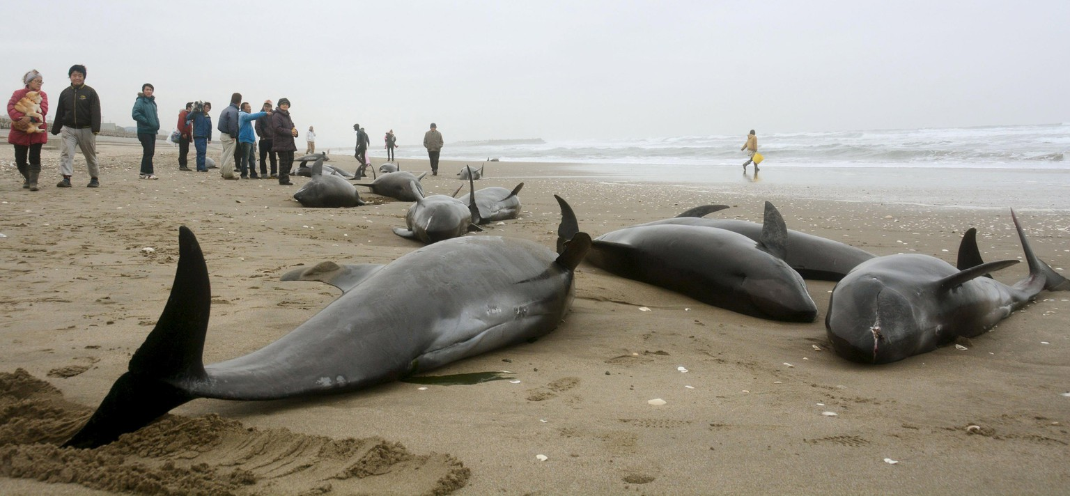 Local residents try to save melon-headed dolphins stranded on the coast in Hokota, northeast of Tokyo, in this photo taken by Kyodo April 10, 2015. Over a hundred dolphins were stranded on the coast on Friday, local media reported. Mandatory credit REUTERS/Kyodo   TPX IMAGES OF THE DAY  ATTENTION EDITORS - FOR EDITORIAL USE ONLY. NOT FOR SALE FOR MARKETING OR ADVERTISING CAMPAIGNS. THIS IMAGE HAS BEEN SUPPLIED BY A THIRD PARTY. IT IS DISTRIBUTED, EXACTLY AS RECEIVED BY REUTERS, AS A SERVICE TO CLIENTS. MANDATORY CREDIT. JAPAN OUT. NO COMMERCIAL OR EDITORIAL SALES IN JAPAN.