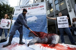 Demonstrators stage a mock clubbing of a seal during a PETA protest against harp seal hunting in Canada outside the Canadian consulate in Los Angeles, California March 31, 2014. REUTERS/Lucy Nicholson (UNITED STATES - Tags: ENVIRONMENT POLITICS CIVIL UNREST)