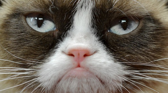 In this undated photo provided by Nestle Purina PetCare is Grumpy Cat. It probably won't affect her famous mood, but Grumpy Cat now has an endorsement deal. The St. Louis-based company announced Tuesday, Sept. 17, 2013, the frown-faced Internet sensation, real name Tardar Sauce, is now the