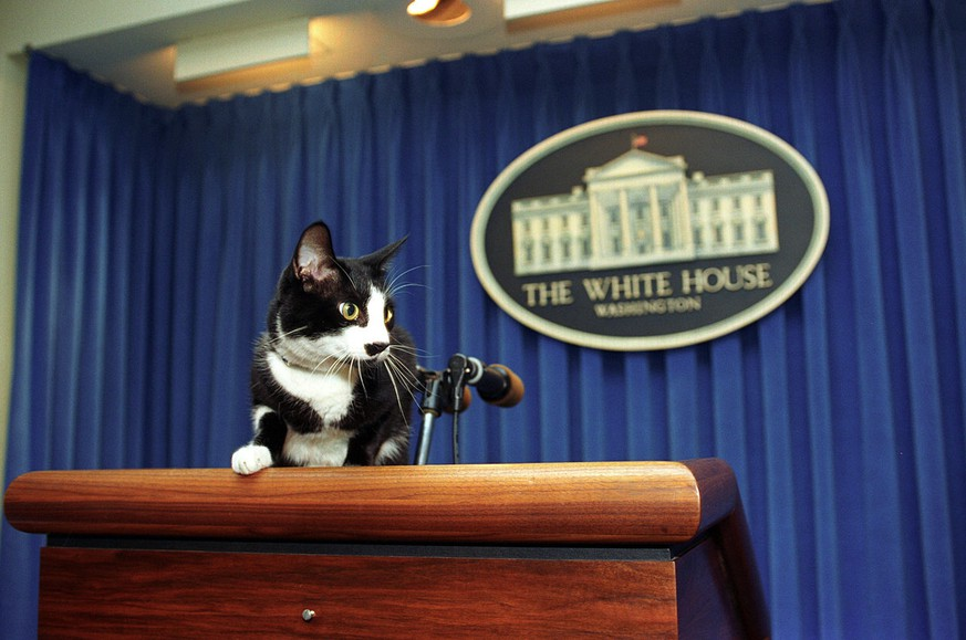 Socks Katze von Bill Clinton (Public Domain)  https://en.wikipedia.org/wiki/United_States_presidential_pets#/media/File:Socks_the_Cat_Explores.jpg