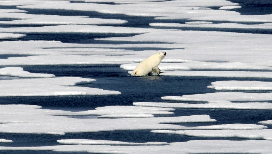 FILE - In this July 22, 2017 file photo, a polar bear climbs out of the water to walk on the ice in the Franklin Strait in the Canadian Arctic Archipelago. Climate scientists point to the Arctic as the place where climate change is most noticeable with dramatic sea ice loss, a melting Greenland ice sheet, receding glaciers and thawing permafrost. The Arctic has warmed twice as fast as the rest of the world since 1988. (AP Photo/David Goldman, File)