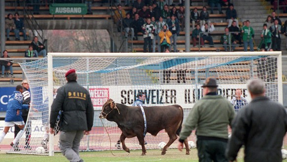 Maradona A bull swaggers over the field in the Letzigrund stadium in Zurich, Switzerland, as police and supporters of the FC Zurich try to catch him before the kick-off of the Swiss Premier League soccer game FC Zurich vs. FC St. Gallen Sunday, Febr. 28, 1999. The bull escaped a few days ago from the nearby slaughterhouse, was seen by supporters of the FC Zurich and immediatelly bought to save his life. Sunday afternoon he came to his first game at the stadium as an FC Zurich mascot, but lost his interest in soccer even before the kick-off, climbed from the field to the stand and left the stadium again before the game started. (KEYSTONE/Christoph Ruckstuhl)