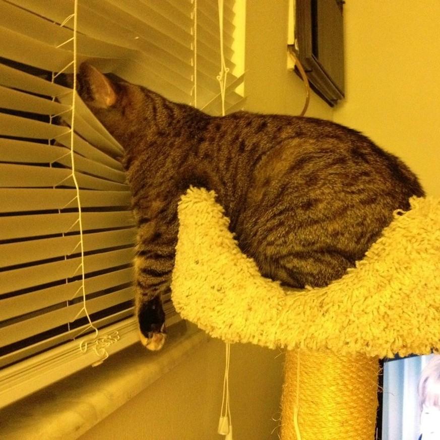 12 zeichen dass deine katze die kontrolle ber dein zuhause bernommen hat. Black Bedroom Furniture Sets. Home Design Ideas