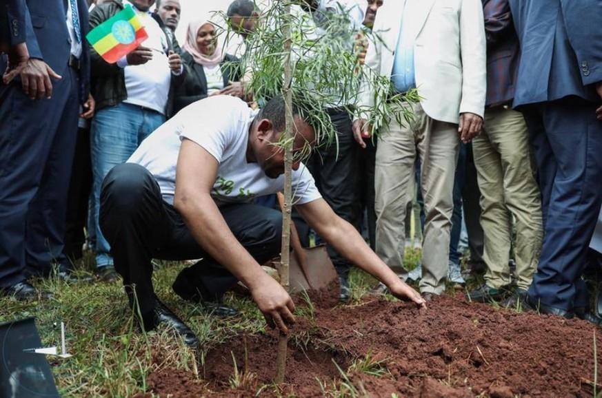 Äthiopien will grüner werden: 350 Millionen Bäume gepflanzt