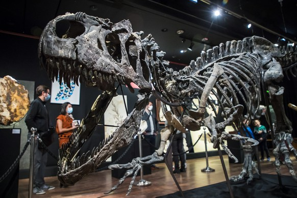 epa08733650 Visitors look at the skeleton of an Allosaurus dinosaur in Paris, France, 10 October 2020. The Allosaurus dinosaur species from the Upper Jurassic (161-145 million years) was discovered in Johnson County, Wyoming, USA. It is 3,50 meters high and 10 meters long. The skeleton will be auctioned at Drouot auction house on 13 October 2020 and is estimated to fetch between 1,000,000 and 1,200,000 euros.  EPA/CHRISTOPHE PETIT TESSON