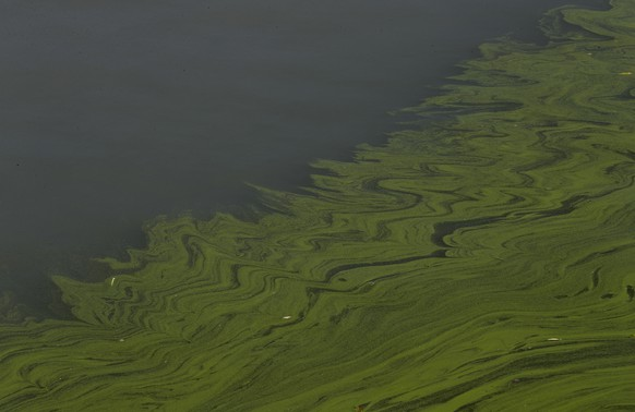 FILE - In this Sept. 15, 2017, file photo, algae floats on the surface of Lake Erie's Maumee Bay in Oregon, Ohio. Ohio is rolling out a new strategy to save Lake Erie from the toxic algae that overwhelms it in the summer. Beginning in February, the state will start offering financial incentives to farmers who adopt new agriculture practices. Those are designed to reduce farm runoff that feeds the algae in the lake. Ohio's approach is being watched closely by states around the U.S. that are struggling with an increasing number of algae outbreaks in lakes and rivers. (AP Photo/Paul Sancya, File)