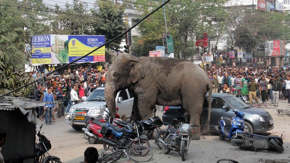 epaselect epa05152994 A wild elephant that strayed into the city and went on rampage is watched by the locals in Siliguri, India, 10 February 2016. The wild elephant went berserk and damaged some buildings and vehicles before it was tranquilised by the Forest personnel.  EPA/STR