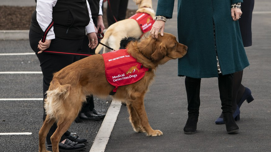 epa07382697 Britain's Camilla, Duchess of Cornwall (C) attends the opening of a new facility of Medical Detection Dogs in Milton Keynes, Britain, 20 February 2019. The facility will train dogs as future assistance dogs and bio-detection dogs.  EPA/WILL OLIVER