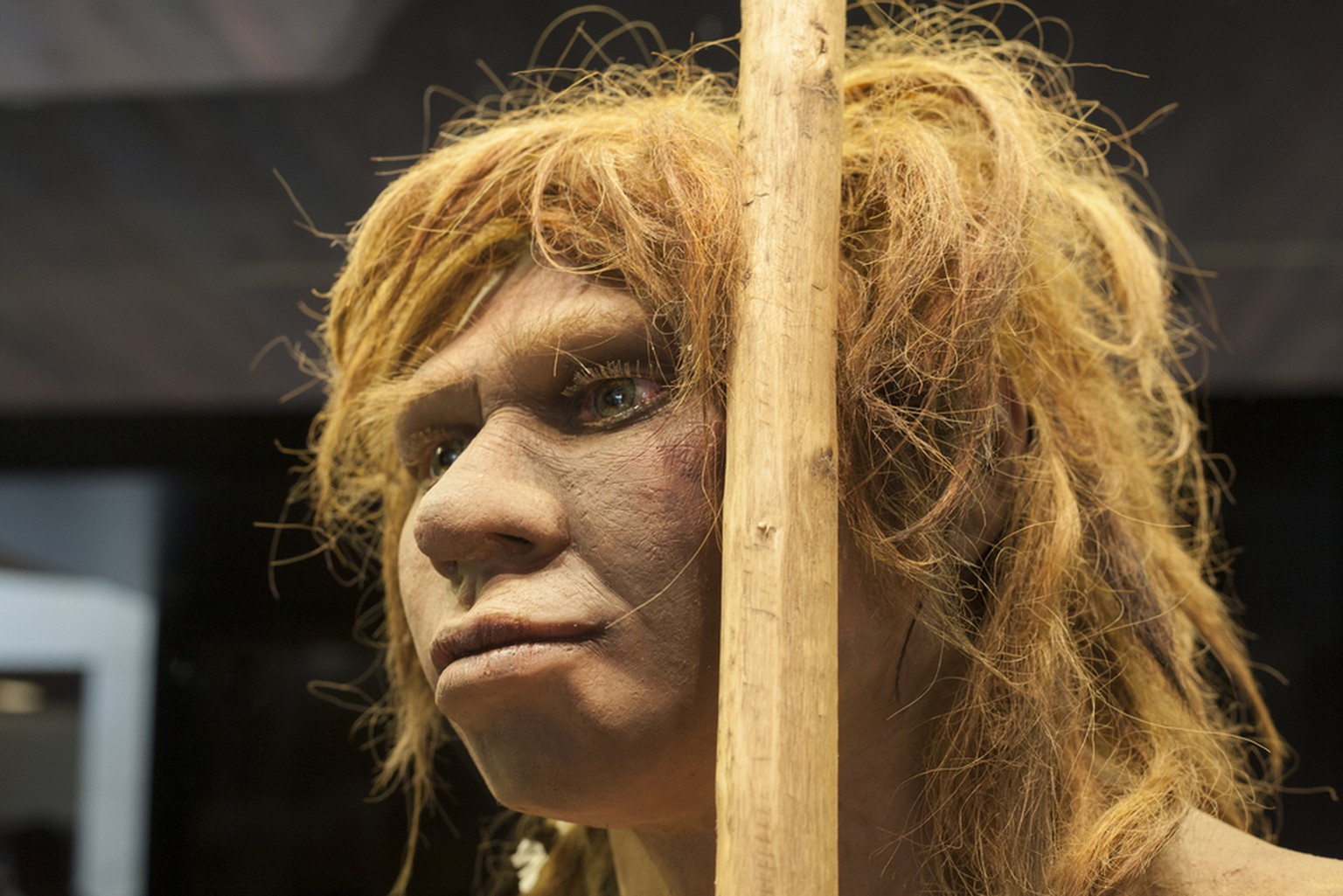 Neandertaler-Frau  Madrid, Spain - November 11, 2017: Life-sized sculpture of Neanderthal female at National Archeological Museum of Madrid