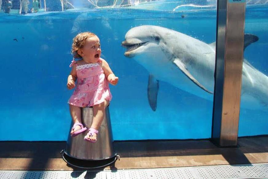 Hvor stor er en delfiner penis