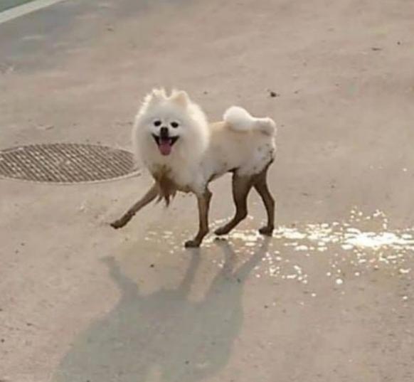Hund ist schmutzig Cute News https://www.reddit.com/r/awwwtf/comments/95tz6j/doggy_long_legs/