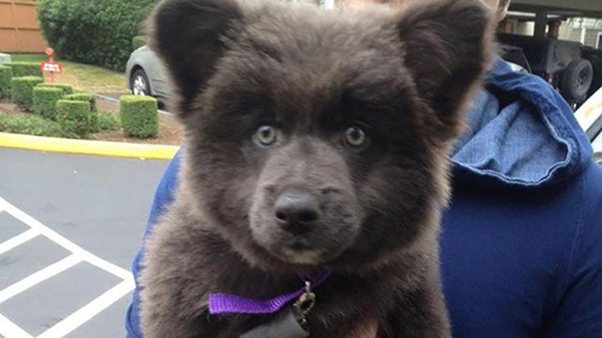 Diese 22 Hunde Sehen Mehr Aus Wie Teddyb 228 Ren Watson