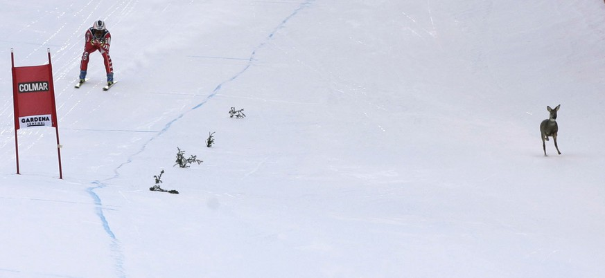 A deer races down the course, right, as Italy's Kristian Ghedina speeds down during a World Cup men's downhill, in Val Gardena, Italy, Saturday, December 18, 2004. (KEYSTONE/AP Photo/Armando Trovati)