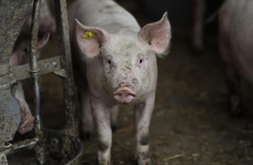 kennst-du-den-speiseplan-eines-schweins
