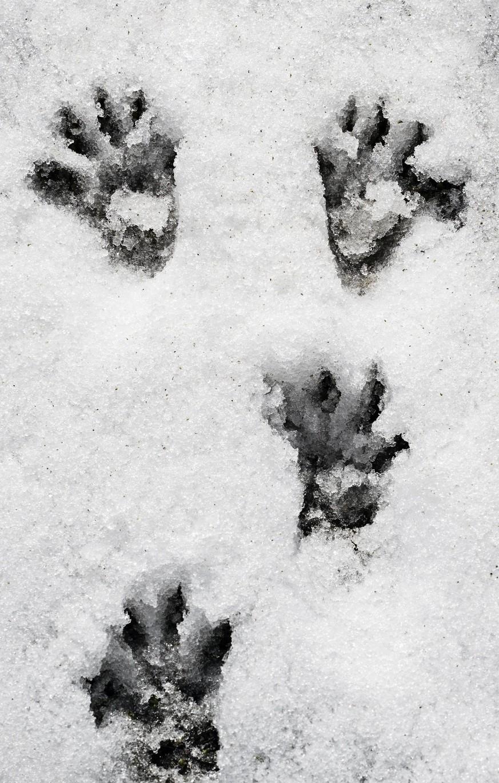 Tiere im winter kennenlernen