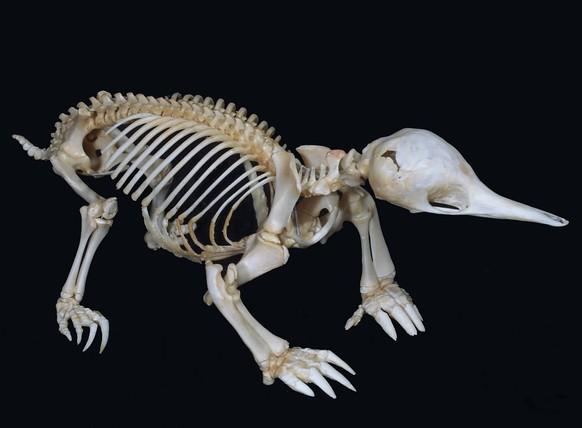 gruseliges knochen quiz tiere an skelett erkennen watson. Black Bedroom Furniture Sets. Home Design Ideas