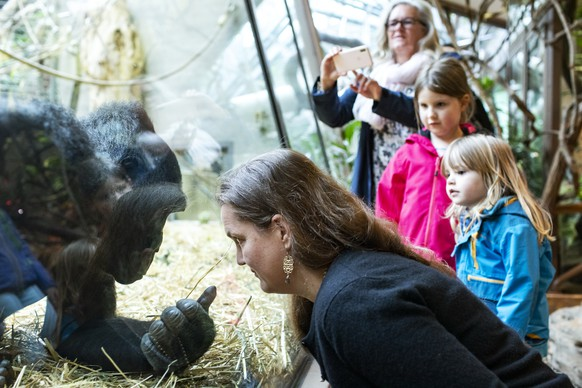 Menschen beobachten die Gorillas im Zoo Zuerich am Samstag, 6. Juni 2020. Der Zoo Zuerich ist ab heute wieder geoeffnet. (KEYSTONE/Alexandra Wey)