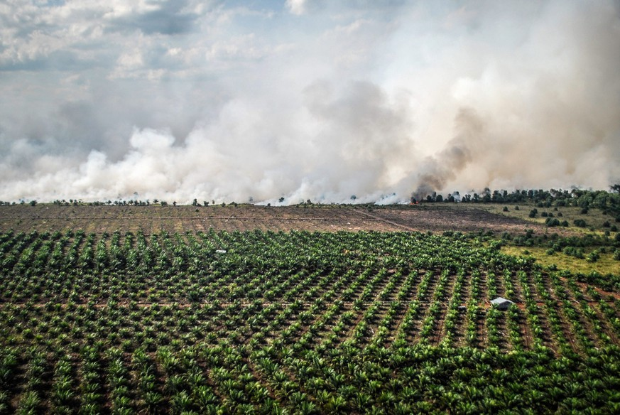 ARCHIV - ZUR WINTERSESSION 2019 MIT DEM THEMA PALMOEL IN INDONESIEN, STELLEN WIR IHNEN FOLGENDES BILDMATERIAL ZUR VERFUEGUNG - (01/42) Smoke rises from burning land during the clearing of more forests to plant more palm oil plantations, in Dumai, Riau province, Indonesia, 09 August 2016. Natural forest is often burnt, causing large cross country smog issues in south-east Asia, in order to clear land for plantations. Indonesia is the world's largest producer of Palm Oil, made from the palm fruit, followed closely by Malaysia. Palm plantations are built on destroyed tropical rainforest, causing the death and displacements of many species, among them the endangered orangutan. Palm oil is an ingredient in many products across supermarket shelves. Consumer groups are pressing end users to buy only products containing substitutes or sustainably sourced palm oil, warning species and pristine habitats are on the brink of being lost forever to humankind. EPA/RONY MUHARRMAN PLEASE REFER TO THE ADVISORY NOTICE (epa05651440) FOR FULL PACKAGE TEXT