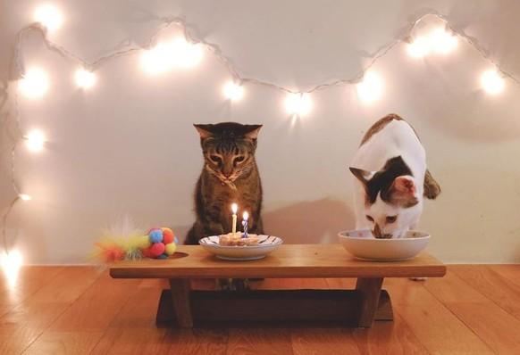 Geburtstag Katze Lucy Www Stimmungs Bilder De