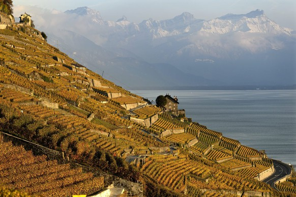 The autumn coulored vineyard Desaley at the region of Lavaux on the shores of the Lake Geneva pictured in front of the snow covered Swiss Alps, in Epesses, Switzerland, Monday, October 29, 2012. The Lavaux Vineyard Terraces have been included into UNESCO's list of world cultural heritage sites in 2007. (KEYSTONE/Laurent Gillieron)