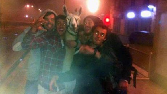 http://lordsofthedrinks.com/2013/11/04/drunk-french-guys-take-a-lama-for-a-tram-ride/ frankreich zirkus llama party