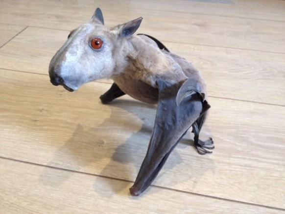 Hammerheaded Bat Cute News https://www.reddit.com/r/awwwtf/comments/93e1jo/hammerheaded_bat/
