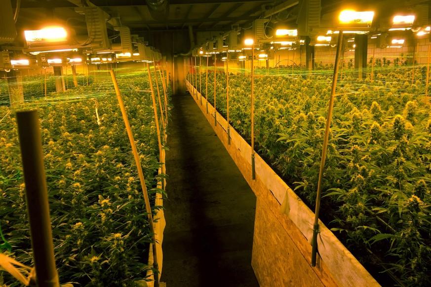 Milliardenmarkt Marihuana Wie Schweizer Hanfz 252 Chter