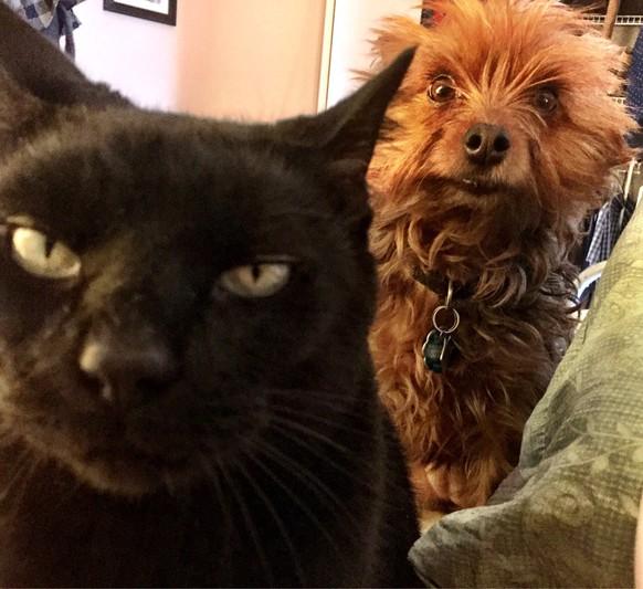 anzeichen dass deine katze dich töten will