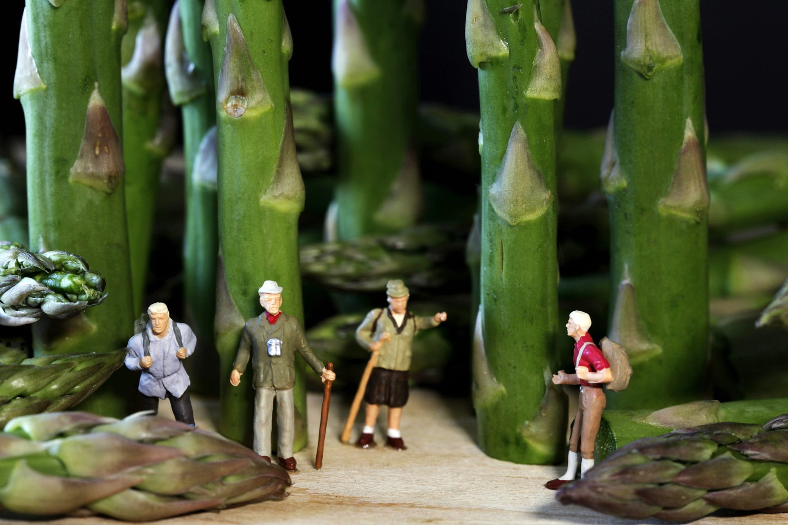 PIC FROM CATERS NEWS AGENCY - (PICTURED: MINIATURE PEOPLE SURROUNDED BY ASPARAGUS.)- An ingenious artist places miniature models next to normal-sized food to make it look like they have BIG appetites. Laurie McCormick uses fruits and vegetables to create every day scenes for her tiny people. In one scene, the 63-year-old uses asparagus spears instead of a forest for a group of four small explorers. For another miniature mountaineering experience, Laurie, from Los Angeles, USA, uses multi-coloured peppers in place of rocks as climbers clamber across. Financial advisor Laurie has been creating her miniscule masterpieces since 2011. SEE CATERS COPY.   (FOTO: DUKAS/CATERSNEWS) *** Local Caption *** PIC FROM CATERS NEWS AGENCY - (PICTURED: MINIATURE PEOPLE SURROUNDED BY ASPARAGUS.)- An ingenious artist places miniature models next to normal-sized food to make it look like they have BIG appetites. Laurie McCormick uses fruits and vegetables to create e