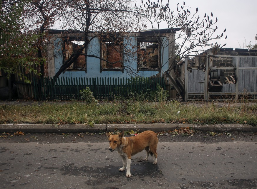epa04417096 A dog stays in front of destroyed building at the small eastern city of Debaltseve, Donetsk area, Ukraine, 25 September 2014. The worst phase of the war in Ukraine is over, Ukrainian President Poroshenko said 25 September as he announced that he intends to apply for European Union membership in 2020. The president said earlier that a ceasefire with separatists in eastern Ukraine was holding and that no government soldiers were wounded during the past 24 hours.  EPA/KONSTANTIN GRISHIN