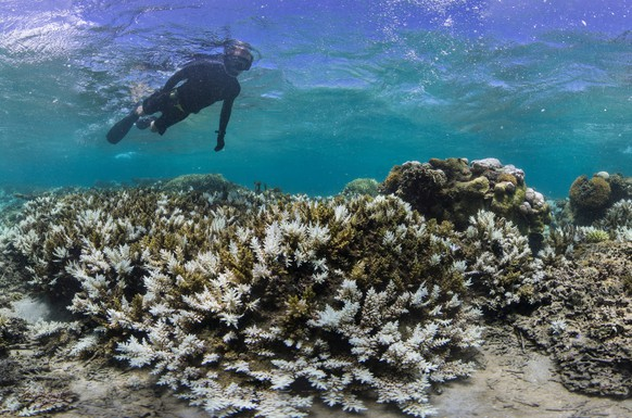 In this March 2016 photo released by The Ocean Agency/Reef Explorer Fiji, a snorkeler swims above coral that has bleached white due to heat stress in Fiji. Coral reefs, unique underwater ecosystems that sustain a quarter of the world's marine species and half a billion people, are dying on an unprecedented scale. Scientists are racing to prevent a complete wipeout within decades.  (Victor Bonito/The Ocean Agency /Reef Explorer Fiji via AP)