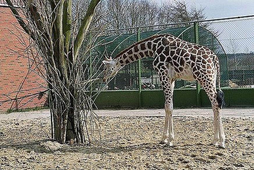 næstved zoo park læge rør