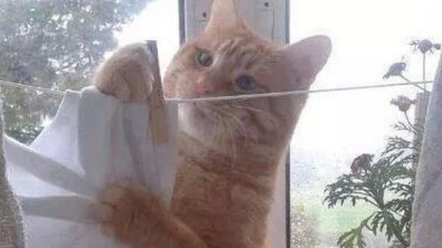 lustige bilder von katzen die beim w sche waschen helfen watson. Black Bedroom Furniture Sets. Home Design Ideas