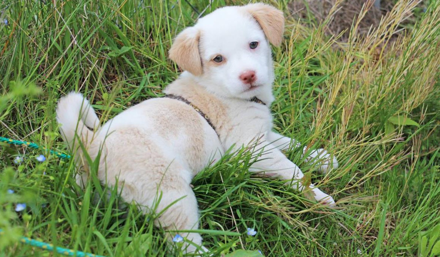 Hundewelpe In Kartonschachtel Ausgesetzt Watson