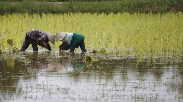 epa05437494 Lao farmers plant rice in a paddy field on the outskirts of Vientiane, Laos, 23 July 2016. Laos economic growth reached over seven percent a year, as a result of the developing hydropower and export in mining and agriculture. Laos is hosting the 49th Foreign Ministers' Meeting (AMM) and the 23rd Regional Forum (ARF), a meeting between the foreign ministers of the ASEAN member countries and its three dialogue partners aimed to strengthen political, cultural and discuss the solution of global economic, including human trafficking and the South China Sea territory dispute.  EPA/RUNGROJ YONGRIT