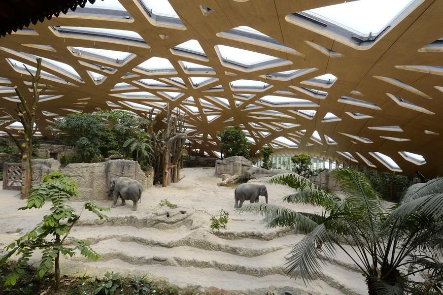 die 10 wichtigsten facts zum neuen elefantenpark watson. Black Bedroom Furniture Sets. Home Design Ideas