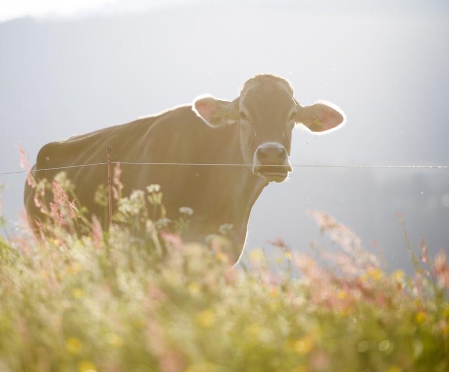 Bauernhoftiere könnten Schlüssel für Asthma-Prävention sein - watson