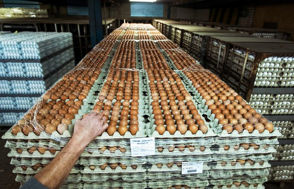epaselect epa04494309 Eggs are piled up at Van Raai egg business in Woudenberg, The Netherlands, 18 November 2014. Supermarkets fear a shortage of eggs by the measures in the Netherlands after the discovery of bird flu. A transport ban throughout the Netherlands of poultry, eggs and manure was issued on 16 November 2014 by the Dutch authorities after the detection of the virus.  EPA/REMKO DE WAAL