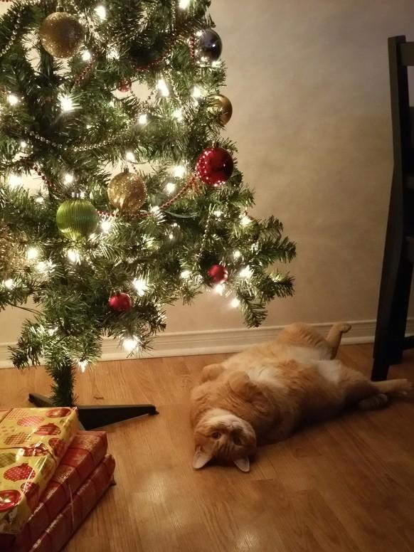 Lustige Weihnachten Bilder.Lustige Bilder Von Katze Die Weihnachten Und Den Weihnachtsbaum