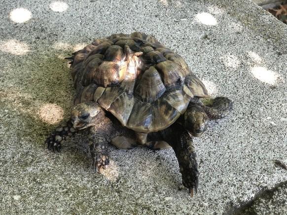 Siamesische Schildkröten Cute News https://www.reddit.com/r/awwwtf/