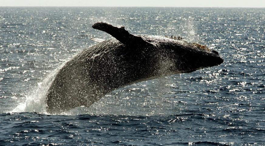 Brasilien: Wal im Dschungel gefunden