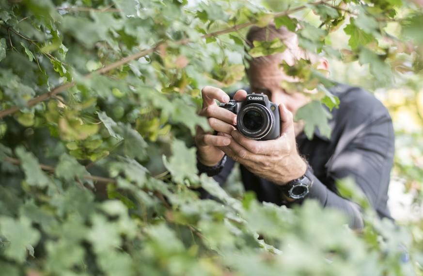 ARCHIV – ZUM 1. PAROLENSPIEGEL ZU DEN EIDGENOESSISCHEN ABSTIMMUNGEN VOM 25. NOVEMBER 2018 STELLEN WIR IHNEN FOLGENDES BILDMATERIAL ZUR VERFUEGUNG - [Symbolic Image, Staged Picture] A professional private detective of the detective agency investigo takes pictures amidst trees, pictured in Otelfingen, Canton of Zurich, Switzerland, on June 8, 2018. (KEYSTONE/Ennio Leanza)