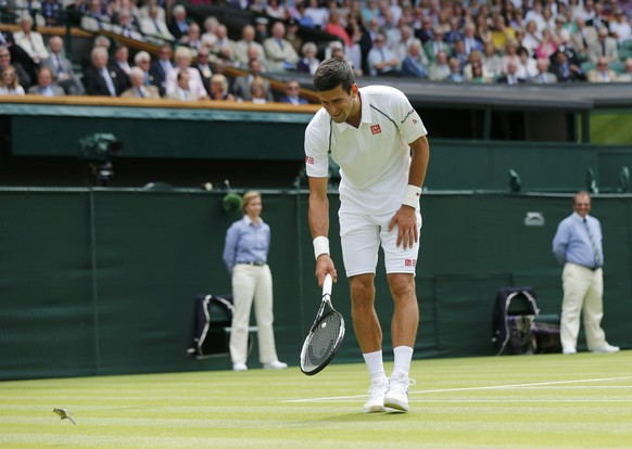Novak Djokovic of Serbia chases a small bird off court during his match against Philipp Kohlschreiber of Germany at the Wimbledon Tennis Championships in London, June 29, 2015.   REUTERS/Suzanne Plunkett
