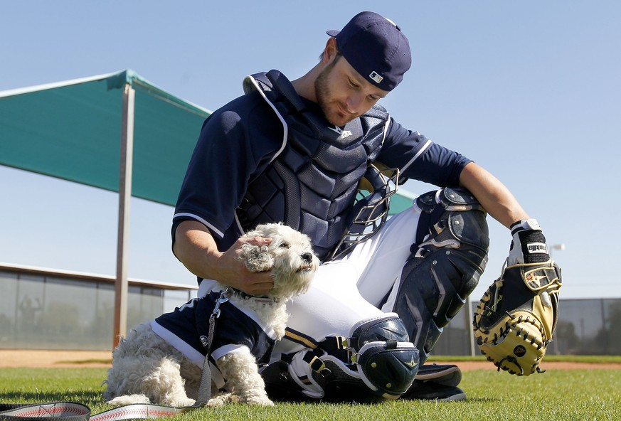 Milwaukee Brewers catcher Jonathan Lucroy pets Hank, a stray dog who has become the new spring training mascot since the dog showed up on Monday, during Brewers spring training baseball practice, Thursday, Feb. 20, 2014, in Phoenix. (AP Photo/Ross D. Franklin)