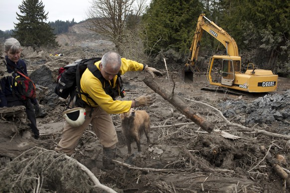 epaselect epa04140806 Joanne Varney and her husband Greg search for victims with dog mADDee,7,  in the debris field after a mudslide near Oso, Washington, USA, 25 March 2014. Authorities have advised that while 14 fatalities have been confirmed, there are still upwards of 176 reports of missing people or unaccounted individuals. The mudslide occurred early 22 March when the rain-soaked side of a mountain in Snohomish County broke free without warning and slammed into the homes, highway and a river below.  EPA/MATT MILLS MCKNIGHT